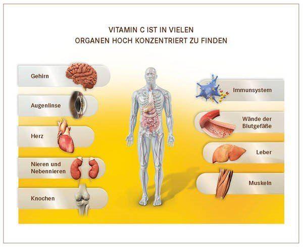 Welche Organe benötigen Vitamin C.